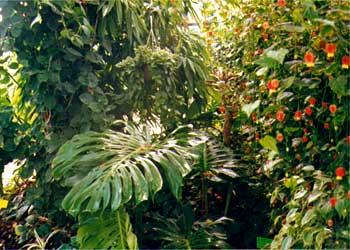 plante exotique sous serre